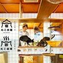 貓奴天堂 日本大阪「貓客棧」即將開幕