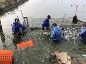 暖冬又來?農民擔心災損漁民憂心盛產