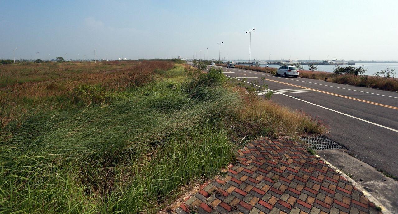 興達港不僅水域未善用,周遭也雜草叢生,景觀顯得落寞。記者劉學聖/攝影