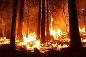 澳洲森林野火肆虐 雪梨面臨巨災