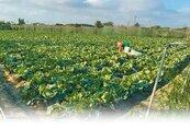 雲林縣喊「都市用地用作農業免徵地價稅」 內政部反對
