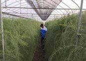 農業外勞每月32K 小農養不起