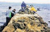 澎湖搶救雞母塢 古法修建