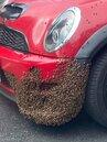 車子保險桿布滿蜜峰 網友揭原因「蜂后在裡面」
