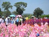 中社觀光花市辦劍蘭新花色活動 期挽回昔日價值與風采