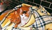 貓隻親和計畫啟動!台北衝貓咪認養率