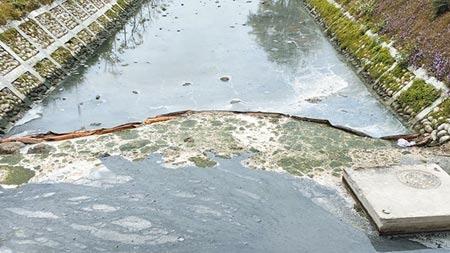 流經台中市葫蘆墩公園的軟埤仔溪水質惡化,水面漂浮奶茶色油汙,甚至發綠變「綠豆湯」,散發陣陣惡臭。(王文吉攝)