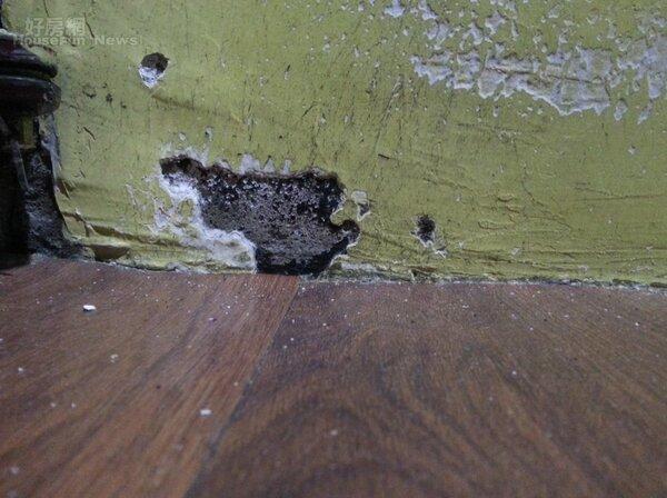 室內濕氣過大容易導致黴菌滋生。照片戴雲發提供