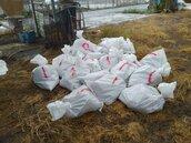 高溫炎熱!大城鄉土雞場染禽流感 撲殺9556隻土雞