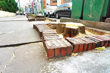黑板樹造成人行道地面隆起龜裂,台灣銀行雇工鋸除後,保留原有植穴,將補植合適樹種。(王文吉攝)