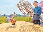嗡嗡嗡 百年放笭鴿恐步入歷史