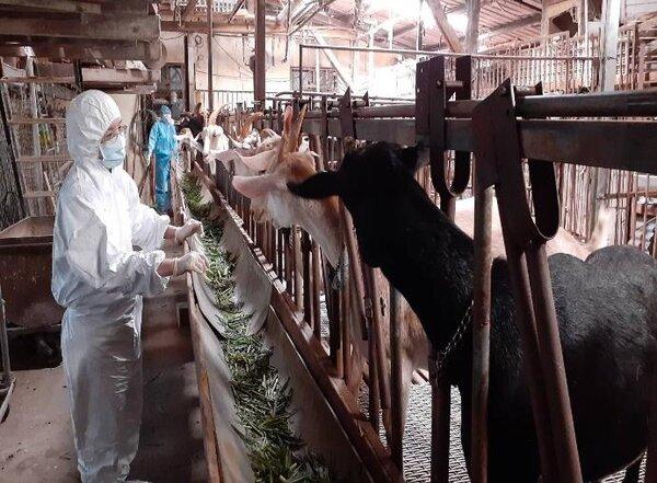 動保處輔導畜牧場加強自主防疫措施。圖/新北動保處提供