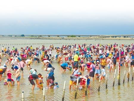 2020台南七股海鮮節開跑,天氣炎熱加上報復性出遊潮,1日下午登場的招牌活動「摸文蛤體驗」吸引爆滿人潮。(莊曜聰攝)