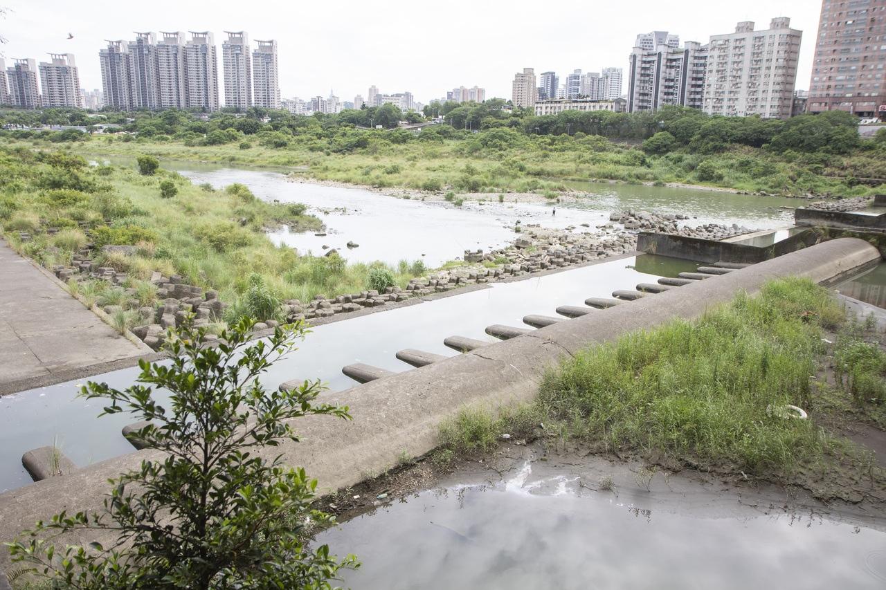 過去新店溪下游沒有豐沛的水量時,水會滲透礫石層,導致水面乾枯大量魚群死亡,新北水利局5年前設置5個矮堰,能維持水位營造魚類的適宜棲地。記者王敏旭/攝影