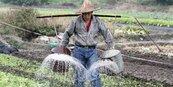 與政府提繳比率1:1 農民65歲領月退 45萬人受惠