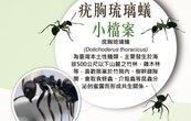 小心這昆蟲入侵你的家!梅雨季數量大增很擾民