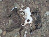 新豐鄉海岸驚傳毒害浪犬浪貓案 家畜所將釐清死因緝凶