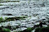 越南暴雨釀土石流淹沒軍營!含2將軍共22官兵罹難