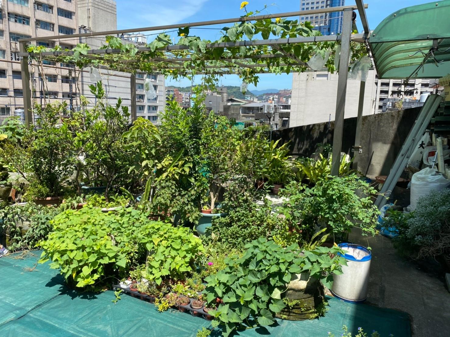 基隆市仁壽里屋頂農園。圖/基隆市政府提供