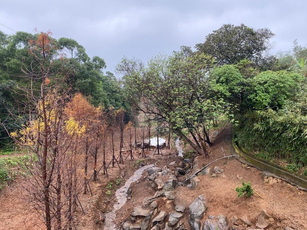 石門區一名江姓女士希望能在農地種植樟樹及柏樹。圖/新北市農業局提供
