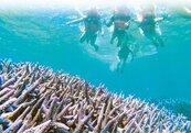 澎縣府設15處繫纜 保護珊瑚礁