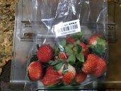 2批日本草莓農藥、鎘超標 譚敦慈教怎麼洗掉農藥最有效