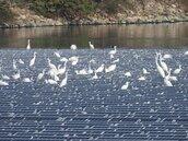 鳥屎減低光電效能 學者:業者要加計環境成本