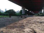 動保志工彩虹河濱公園丟廚餘餵犬隻? 民眾看了流口水