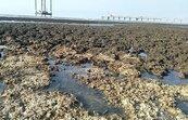 維護藻礁生態 中油三接工程採迴避措施