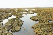 中油:第三接收站會兼顧藻礁生態