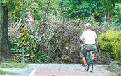 北市路樹逾8.8萬棵 僅16人巡查