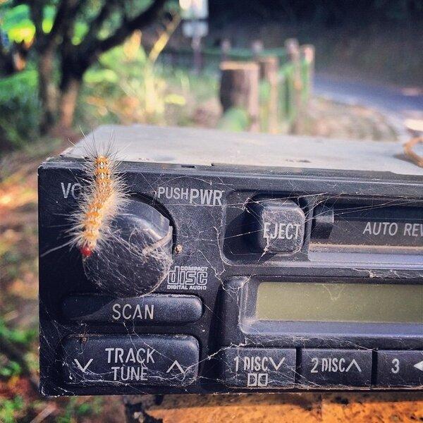 毛蟲收音機  攝影/ Yvonne