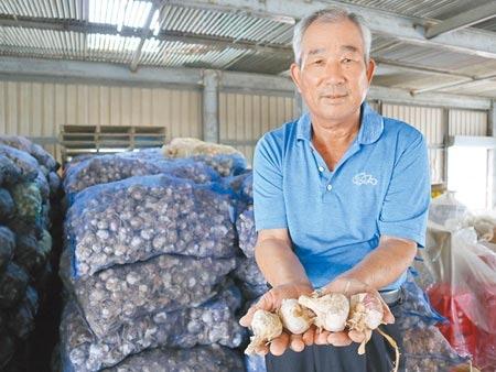 蒜農郭順得背後一袋袋剛從溼蒜烘乾完成的乾蒜,準備交給收購蒜頭的盤商。圖/張毓翎攝