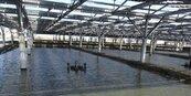 農委會盤點逾4千公頃 拚漁電共生