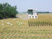 旱災衝擊?米價漲幅創61月新高 主計總處:沒有缺糧問題