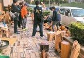 遏止山老鼠!未來盜伐貴重木最重判10年6月、罰2千萬元