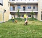 竹市認養流浪犬 享首年免費寵物險