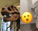 高手在民間!上廁所遇「化石風藝術」 網笑:推測房子有2億年