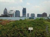 北市「綠屋頂」 容積獎勵建物將比照