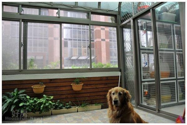 2.露台的植栽區可讓狗兒活動。