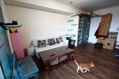 12隻貓爽住25坪喵屋 跳台、吊床、貓洞玩到翻