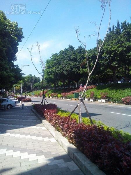 3「天琴」前方緊臨新店溪,綠意扶疏,不少住戶很喜歡在此散步。