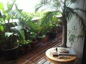 峇里島小露臺 古小偉住在度假屋