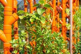 新鮮翠綠的蔬菜,保證無毒又新鮮,想吃多少就摘多少。