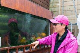 這一缸的金魚,是李老師由自家陽台上開始試驗魚菜共生系統就存在,因此堪稱是開山祖師,也是李老師十分重要的家人。