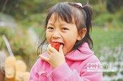 連假採果生意冷 大湖莓農苦哈哈