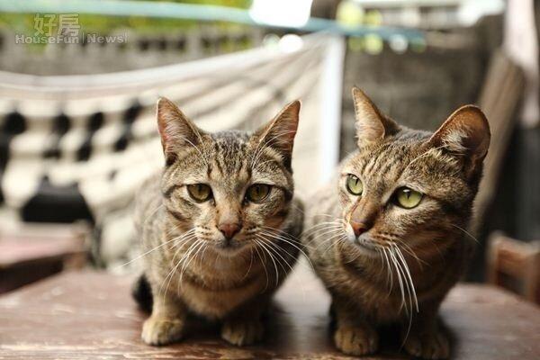 7.兩隻不怕生的店貓,經常和背包客玩在一起。